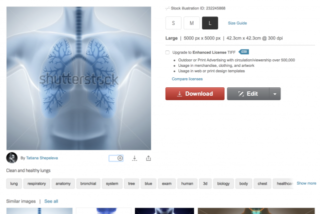 Lungs illustration an image library website