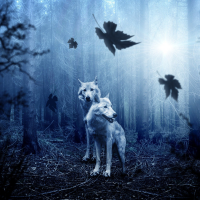 Two wolves in a dark forest