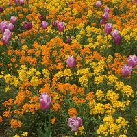 Brightly coloured flowers which clash