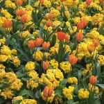 Brightly coloured flowers which are harmonious